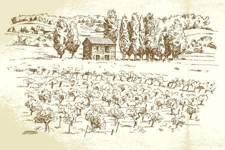 vi�edo: paisaje, vi�a - ilustraci�n dibujados a mano Vectores