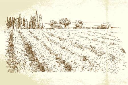 winery: Hand drawn vineyard Illustration