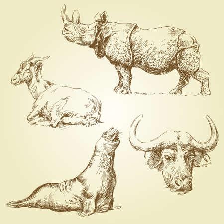 of antelope: wild animal