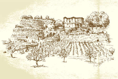 wineries: hand drawn vineyard