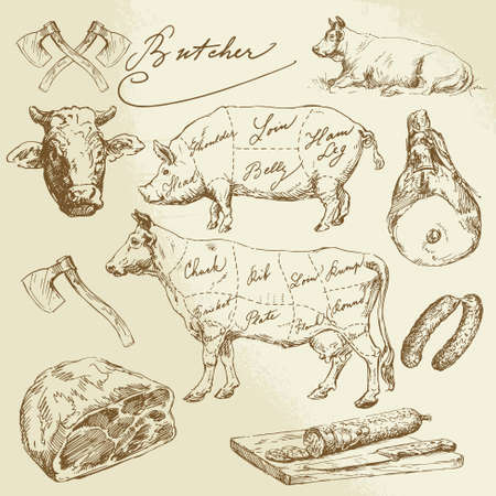 rind: Schweine-und Rindfleisch Schnitte - Hand gezeichnete Sammlung Illustration