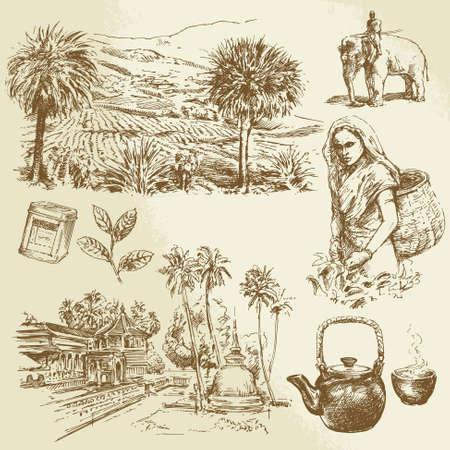 Piantagioni di tè - set disegnata a mano Archivio Fotografico - 24058233