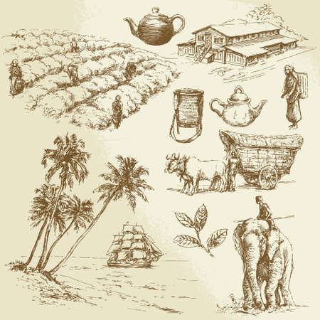 forest tea: tea plantations - hand drawn set