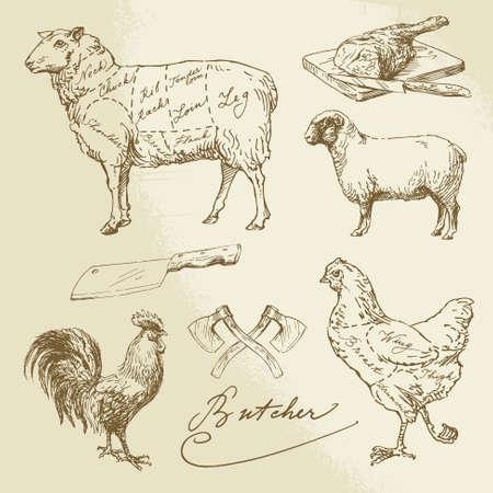 carnicero: corte de carne - cordero, pollo - ilustración dibujados a mano Vectores