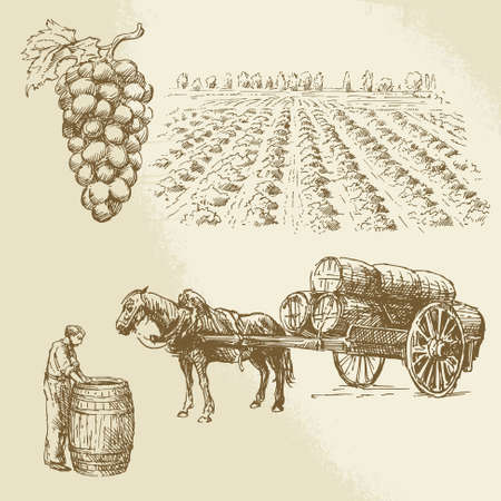 vineyard, harvest, farm - hand drawn collection  Ilustração