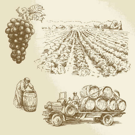 vineyard, harvest, farm - hand drawn collection  Vettoriali