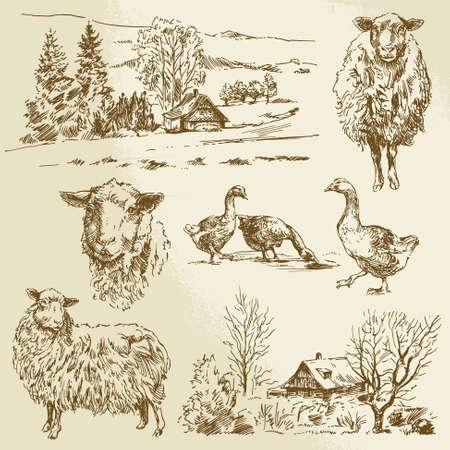 old farm: rural landscape, farm animal - hand drawn illustration