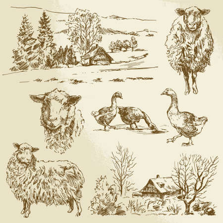 rural landscape, farm animal - hand drawn illustration