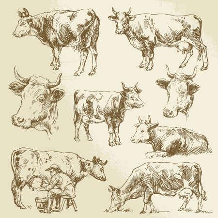 Hand gezeichnete Kühe