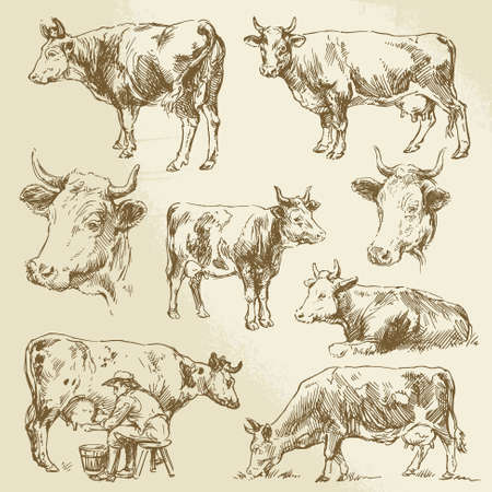 hand drawn cows