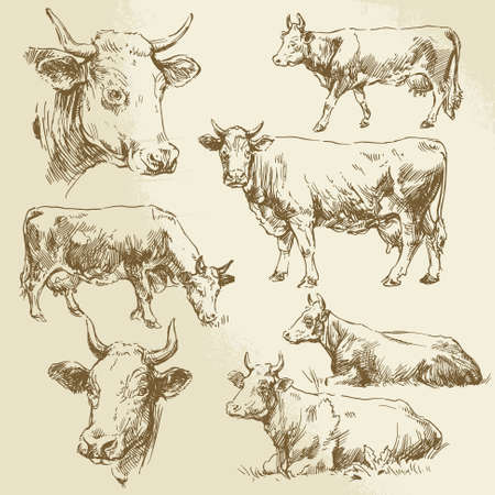 hand drawn cows Vector