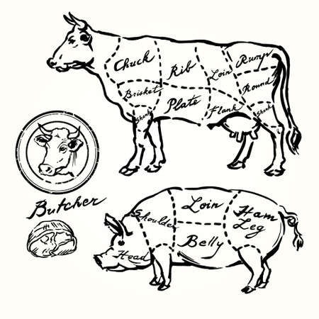 Carnicería: cerdo y ternera cortes - conjunto de dibujado a mano