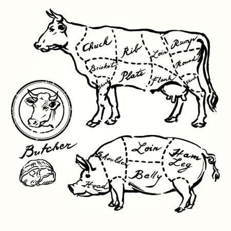 Schweine-und Rindfleisch schneidet - Hand gezeichnet Set Illustration