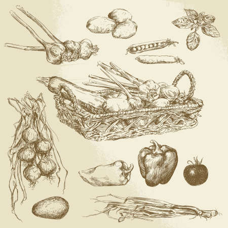 vegetables - hand drawn collection Vector