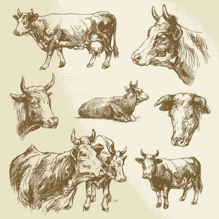 bull head: cows, farm animal - hand drawn collection