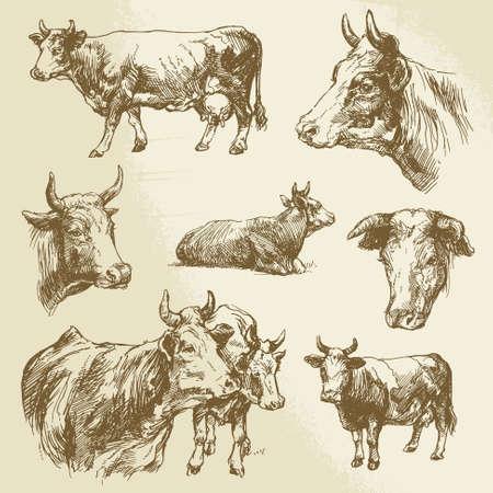 vaca: vacas, animales de granja - colección de dibujado a mano Vectores