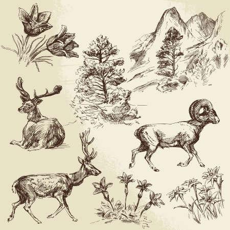 野生の自然、森林および山 - 手描き下ろしイラスト