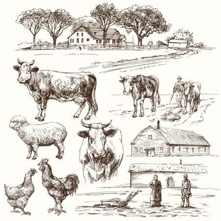dibujo: granja, vaca, agricultura - colección de dibujado a mano