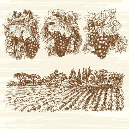 포도원, 농장, 포도 - 손으로 그린 컬렉션