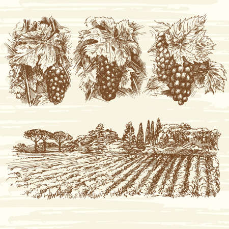 Vignoble, ferme, raisins - collection dessinée à la main Banque d'images - 47634934