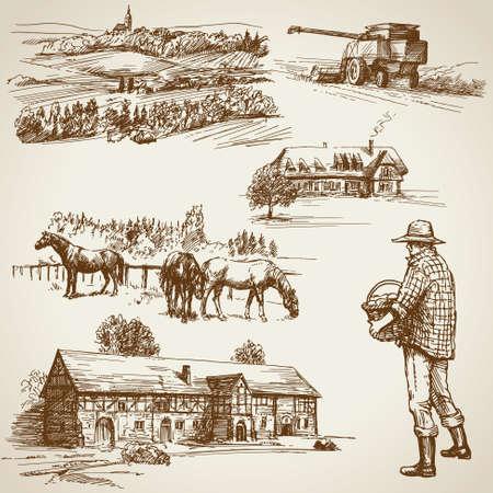 Felder, Ernte auf dem Bauernhof Standard-Bild - 50302882