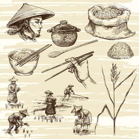 ilustracion: dibujado a mano ilustración, la cosecha de arroz