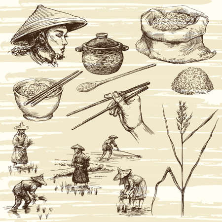 grain field: hand drawn illustration, rice harvest
