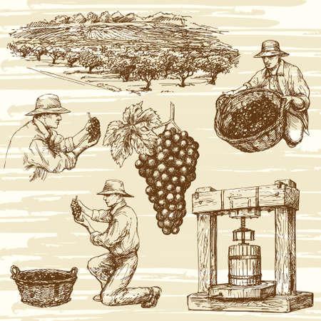 vineyard, hand drawn collection