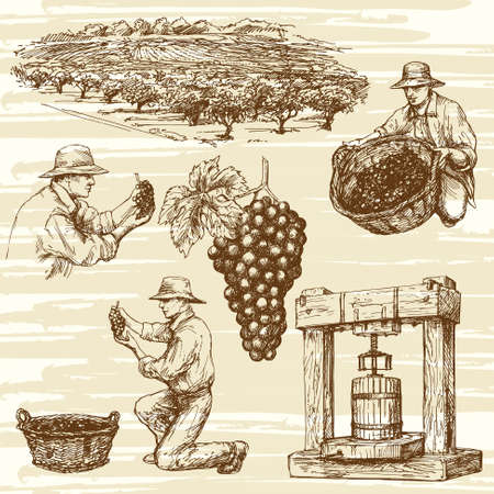 wine grower: vineyard, hand drawn collection