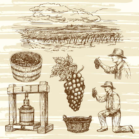 vineyard, hand drawn collection