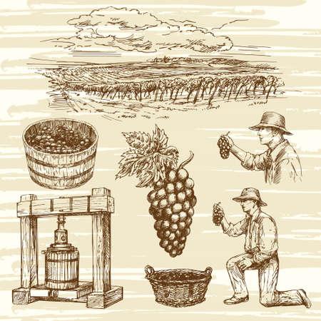 viñedo: viñedo, dibujado a mano la colección Vectores