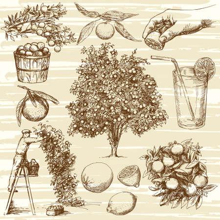 Hand getrokken oranje fruit en de boom. Citroen en mandarijn. Oranje boom oogsten. Vector Illustratie