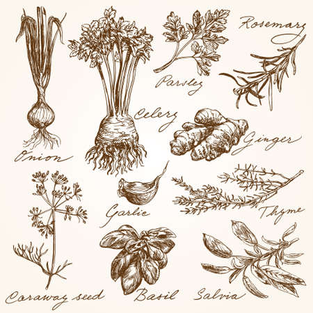 hand drawn herbs collection