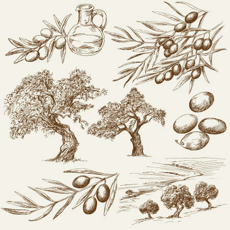 stoneware: Hand drawn olive set Illustration