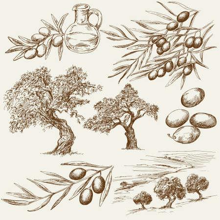 Insieme disegnato a mano di oliva Vettoriali