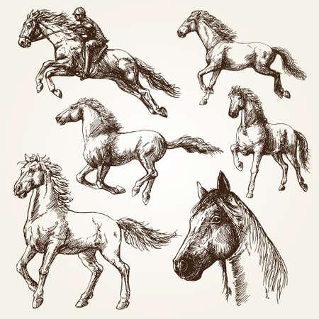 cavallo che salta: Cavalli. Hand drawn set.