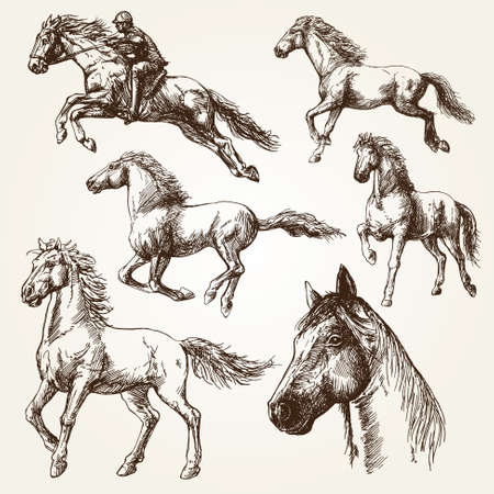 horse riding: Horses. Hand drawn set. Illustration