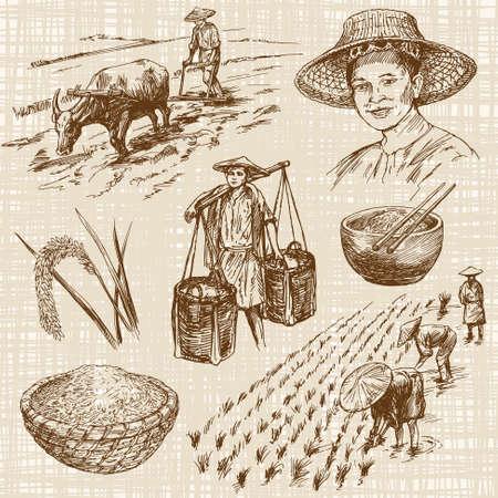 agricultor: dibujado a mano ilustración, la cosecha de arroz