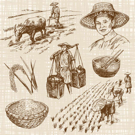 to field: Hand drawn illustration, rice harvest Illustration