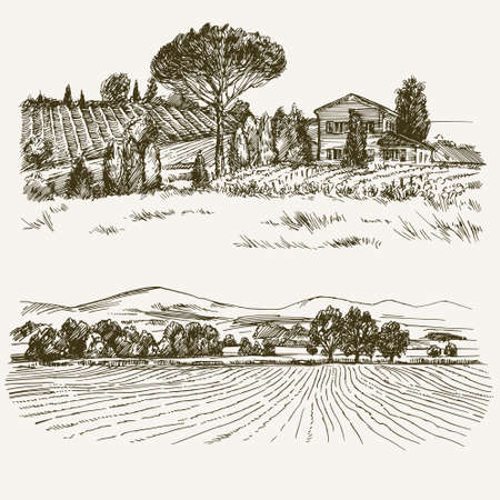 vineyards: Rural landscape with country house and vineyard.