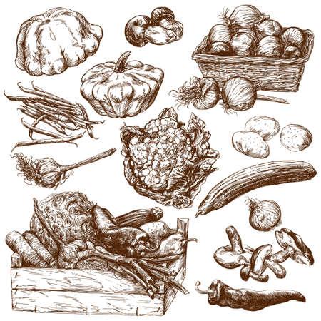 Gemüse. Hand gezeichnet gesetzt.