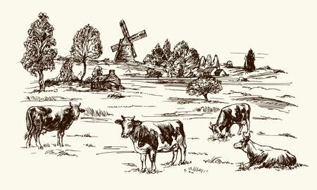 grazing: Cows grazing on meadow. Hand drawn illustration.