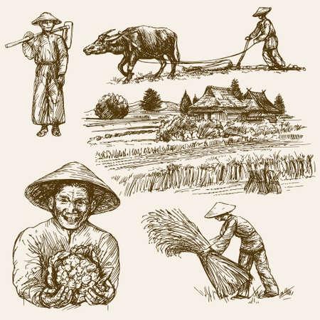 필드에서 작업하는 아시아 농부. 손으로 그린 그림. 쌀 수확.