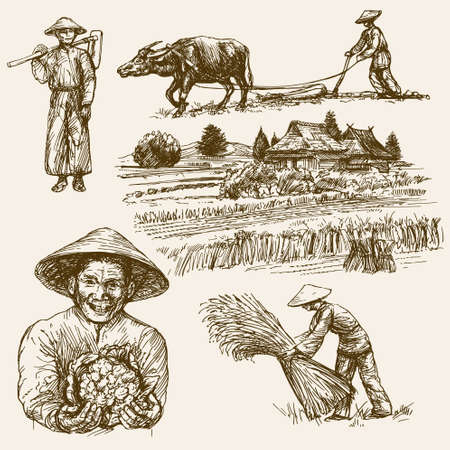 plow: Asian farmers working on Field. Hand drawn illustration. Rice harvest.