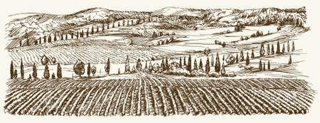 Breite Ansicht von Weinberg. Vineyard Landschaft Panorama. Hand gezeichnete Illustration. Illustration