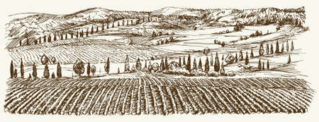 tuscan: Wide view of vineyard. Vineyard landscape panorama. Hand drawn illustration.