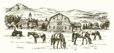 Chevaux paissant sur prairie. Hand drawn illustration. Banque d'images - 69807103