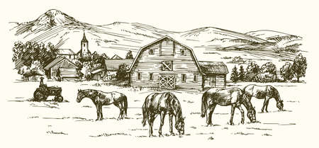 Horses grazing on meadow. Hand drawn illustration.