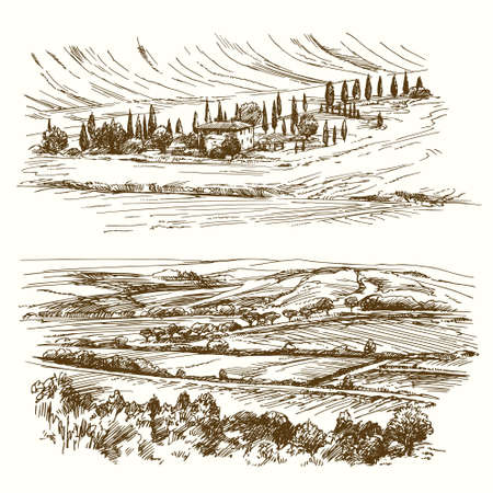 grove: Vineyard. Agricultural landscape. Hand drawn collection.