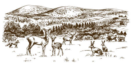 Woodland scenery, forest with deers. Hand drawn illustration